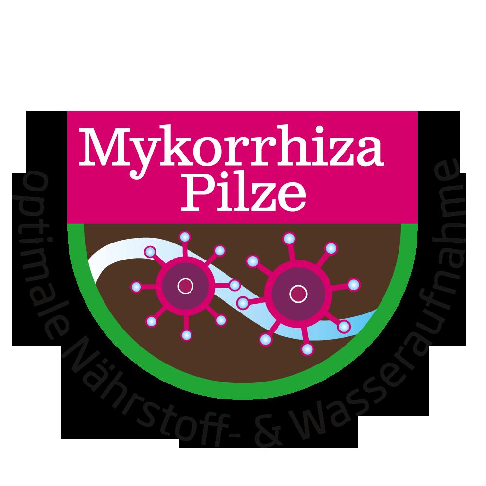 Mykorrhizza