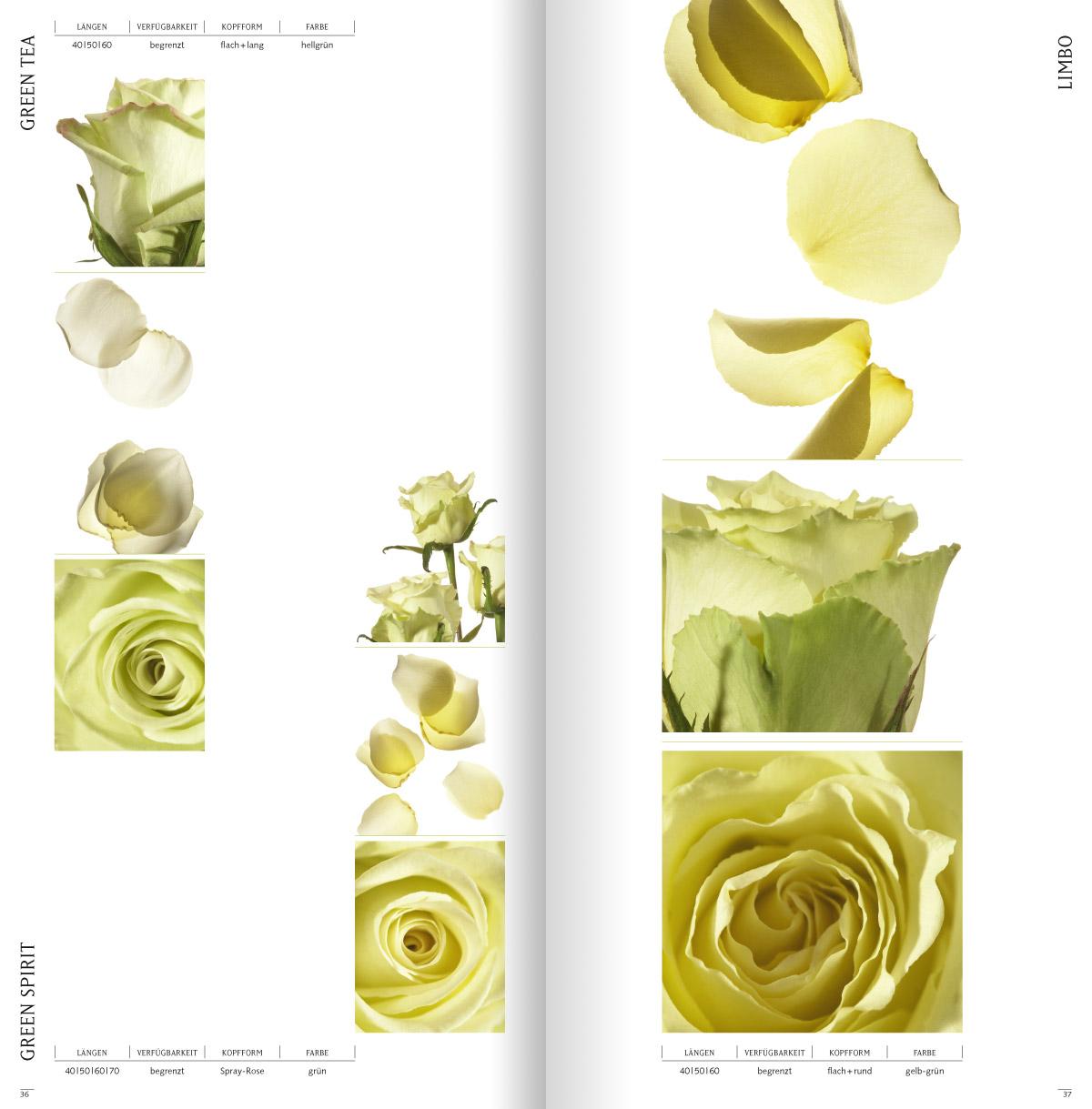 rosen4