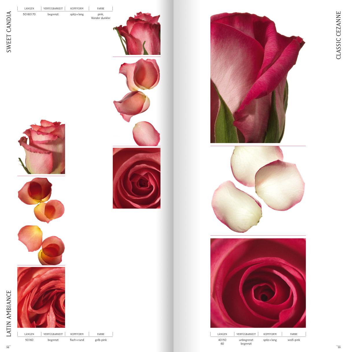 rosen6