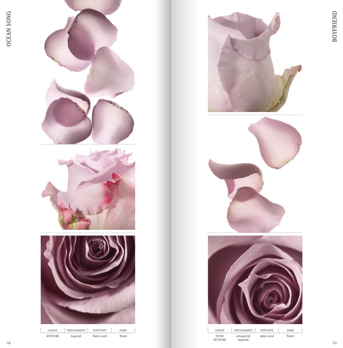 rosen7